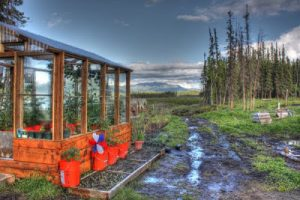 Greenhouse surrounded by beautiful Alaskan scenery.