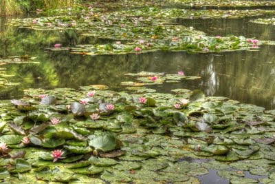 A pond overfilling with water lilies - Monet's pond
