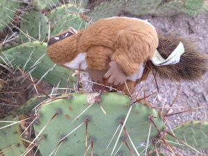 Image of a squirrel stuffed animal placed atop a cactus