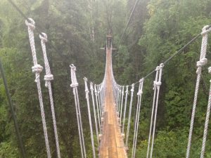 Image of a rope bridge suspended high in the tree tops