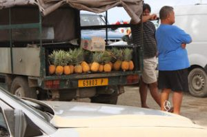 Image of the back of a local truck filled with pineapples for sale