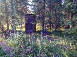Image of an outhouse surrounded by Fireweed.