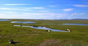 Image of a vast green wetland with scattered lakes