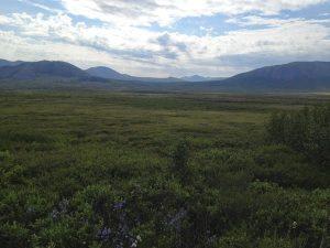 Image of a bright green open tundra landscape