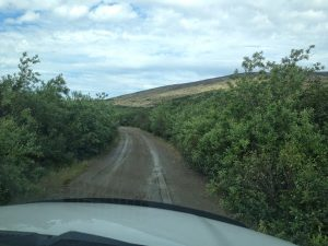 Image of a dirt road surrounded by green shubbery