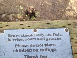 "Image of a posted sign reading, ""Bears should only eat fish, berries, and roots and grasses. Please do not place children on railings. Thank you"""
