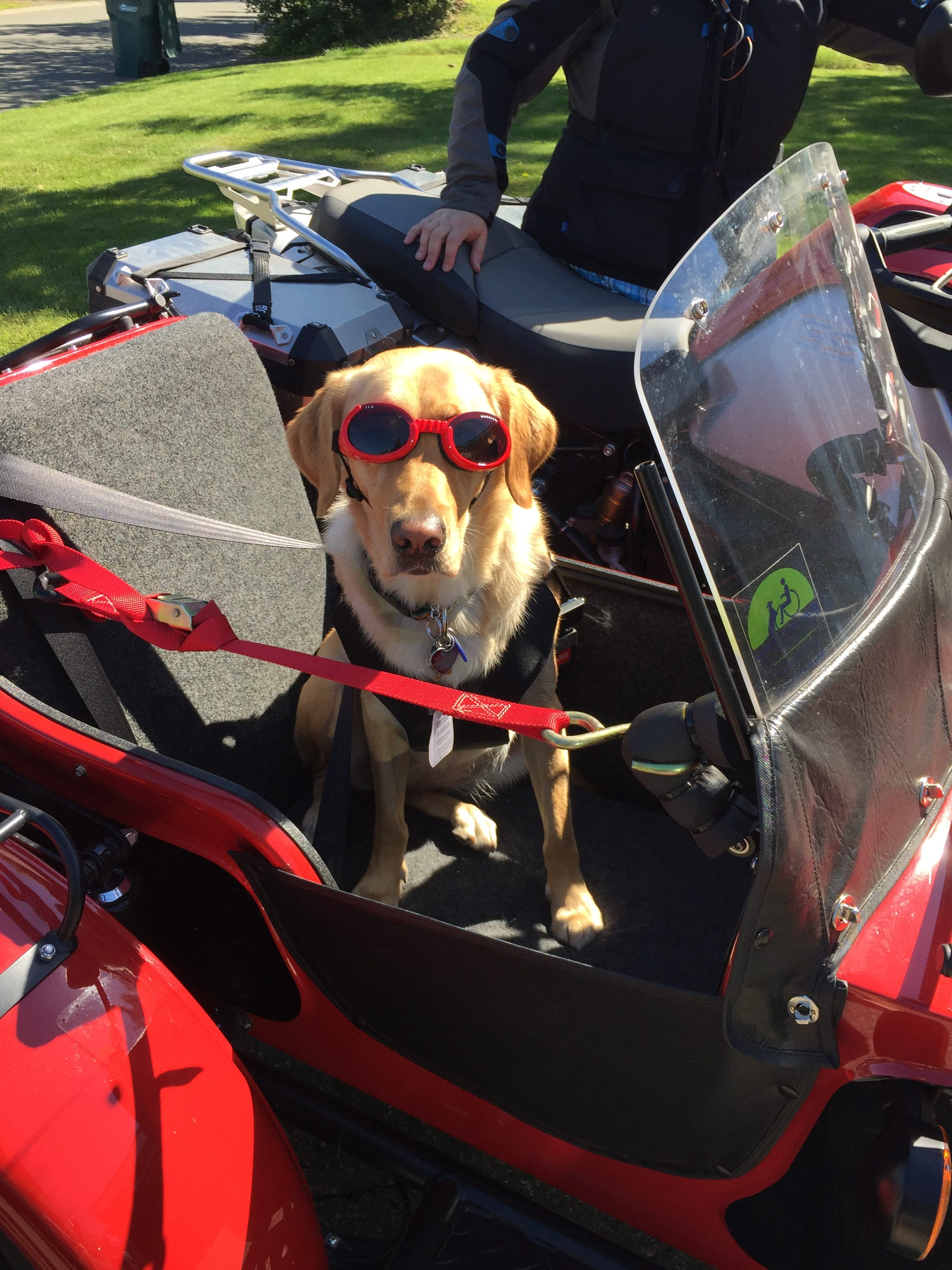 Rasta sitting in the side car or a red motorcycle with dog goggles.